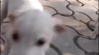 Baby Funny Cute Baby Dogs Compilation