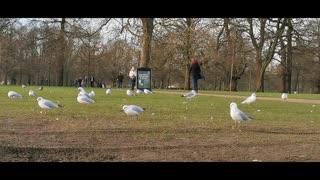 Beautiful Birds Videos With Music