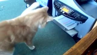 Cat having fun with printer