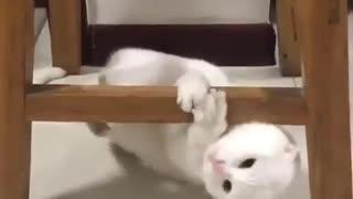 So Crazy Cat