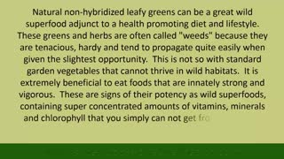 Wild Edible Greens, Foraging Your Own Wild Superfoods