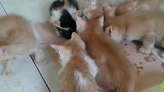 Cute kittens have lunch