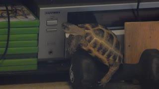 Wilma Gets Stuck