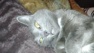 Crazy cat sleeps with her eyes wide open