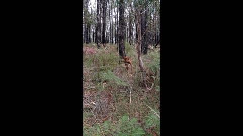 Wild Flowers, Happy Hound, Aussie Bush, Autumn's End