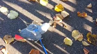 Parrot loves the sun