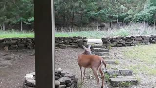 Quarantining With My Favorite Deer