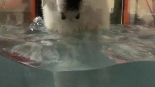 Water Workout for Obi-Wan