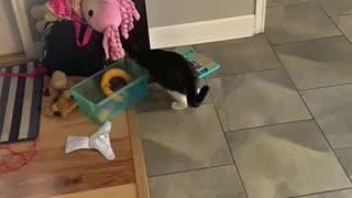 House cat earns her money