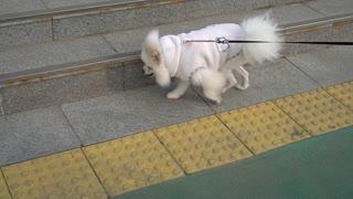 a walking dog