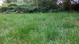 Bird Landed On Soft Spot Grass