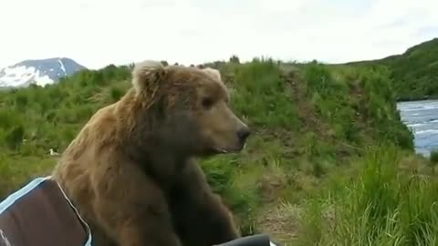 You guys got any Bear......I mean Beer?
