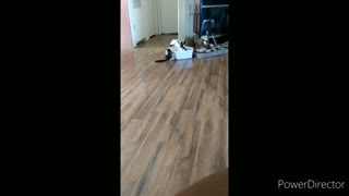 Bunny steals bed from cat