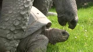 watch World funny turtle turtles