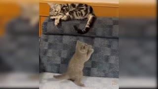 amazing cats compilation