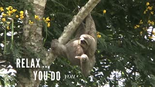 Sloths Aren't Slow, They're Just Super Chill