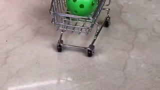 very smart parrot show new tricks
