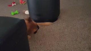 Dog Uses Ottoman as Giant Spinning Top
