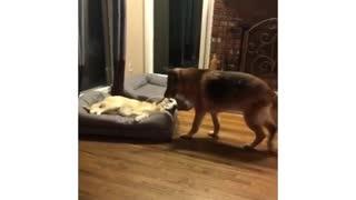 Kayla gives 0 hecks 🤣 Tag someone with a rude dog