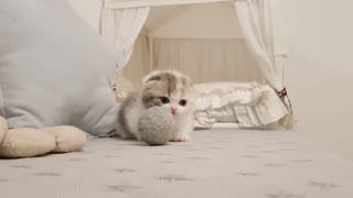 Cute adorable little Kitten