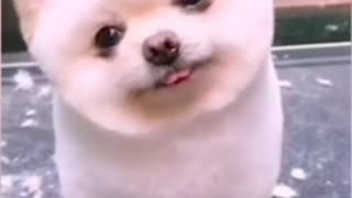 Cute puppy reaction on camera Most viral puppy video on internet