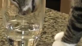 Cat lovers cat cat