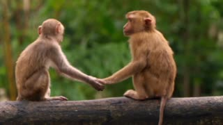 Cute and Funny Monkey Video