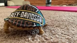 Mr Bob the Turtle Has Many Hats