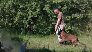 10 Commands Dogs should know: Basic Dog Training
