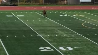 Moose Plays Some Soccer