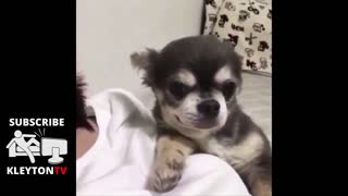 see adorable puppy