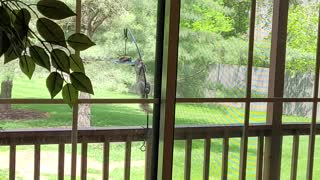 Bird Feeder Gives Squirrel A Workout