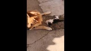 Big dog care