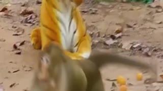 Fake Tiger vs Real Monkey Funny Video.