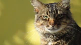 kitty with beautiful green eye