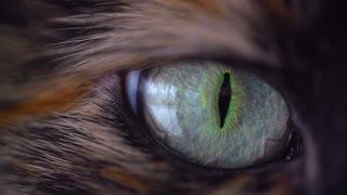 Amazing Cat Eye