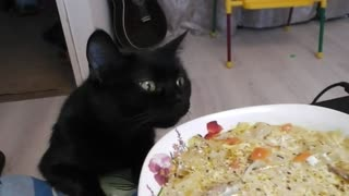 A hungry cat.