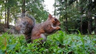 A squirrel eats its favorite food
