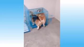 Animals playing and making tricks