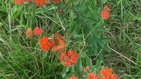 Summertime and Butterflies