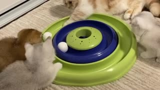 Adorable cats have fun playing toy game