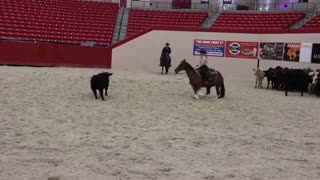 Cutting horse championship at the South Point in Las Vegas.