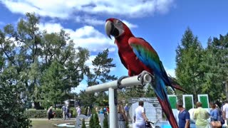 Red and yellow parrot in the park