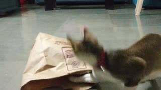 Cats Play Hide-and-Seek with a Paper Bag