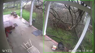 Storm Smashes Back Porch With a Tree