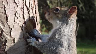 squirrel eats1
