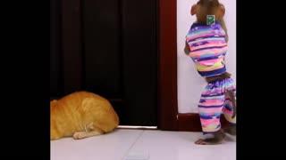 Monkey vs cat funny time