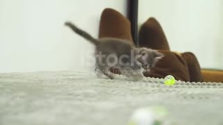 A cat playing with a ball