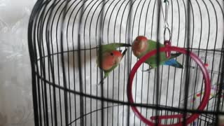 I am very pleased to watch these cute parrots.