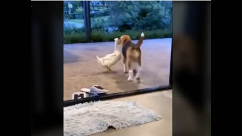 Dog Falls In Love With Duck